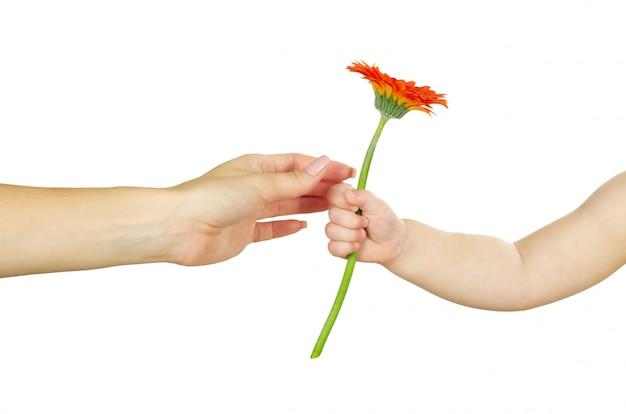 Bambino che dà il fiore rosso del gerber a sua madre. concetto di festa della mamma