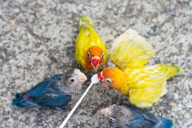Il piccioncino sta mangiando