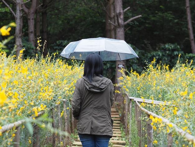 Punto di vista posteriore dell'ombrello asiatico della tenuta della donna al giacimento di fiore giallo nella stagione delle pioggie