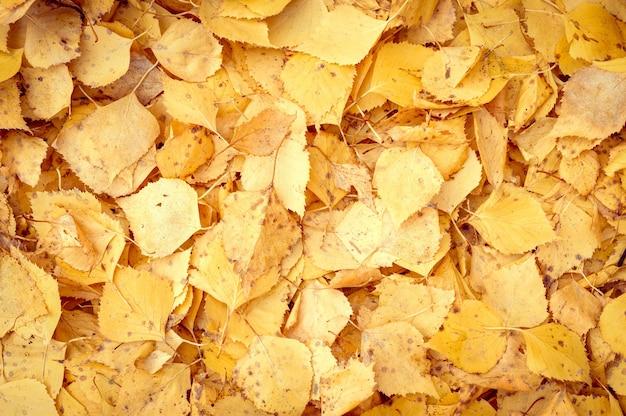 Sfondo di foglie cadute autunnali di un albero di betulla. fogliame autunnale giallo e arancione sul terreno. vista dall'alto