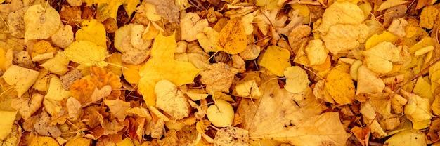 Sfondo di foglie cadute autunnali di un acero e di un albero di betulla. fogliame autunnale giallo e arancione sul terreno. vista dall'alto. striscione