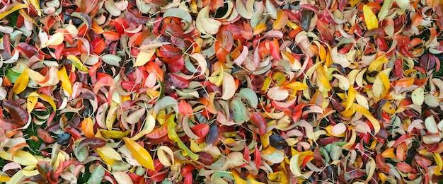 Sfondo di foglie multicolori autunnali.