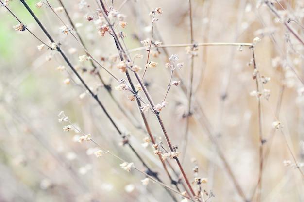 Lo sfondo dei bellissimi fiori colorati