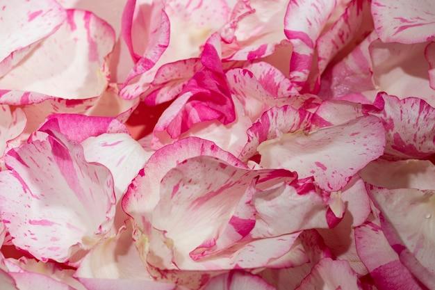 Sfondo di bellissimi petali di rosa naturali clous-ap
