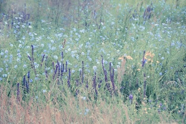 Sfondo bellissimi fiori viola e blu nel campo verde, filtro