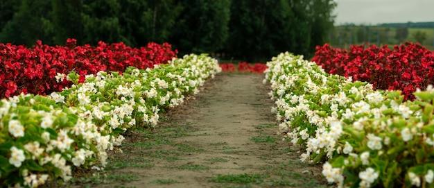 Sfondo di fiori estivi rossi e bianchi brillanti su un'aiuola