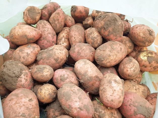 Sfondo di patate scavate in primo piano le patate grandi giacciono a terra