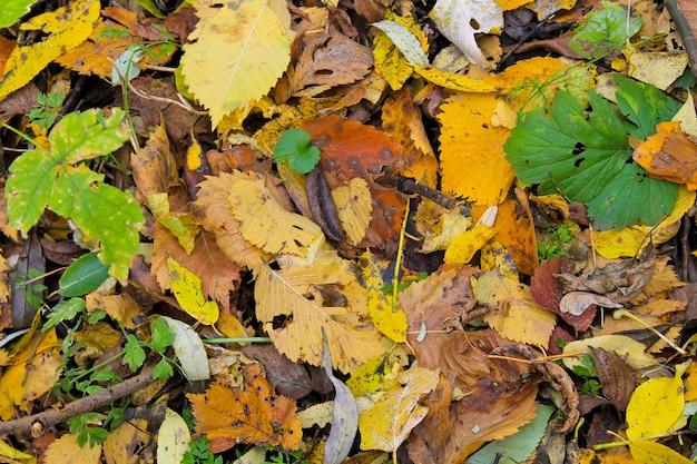 Sfondo di foglie secche cadute