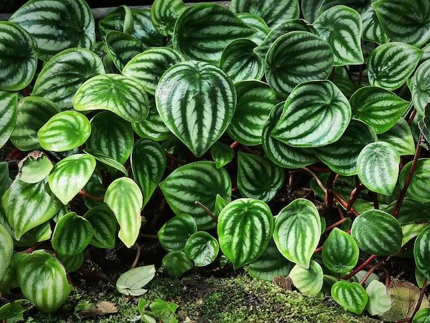 Sfondo di fresche foglie fantasia verde piante