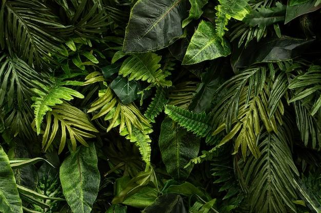 Sfondo da foglie tropicali lucide verdidiverse piante di fogliame su bcakdrop scuro