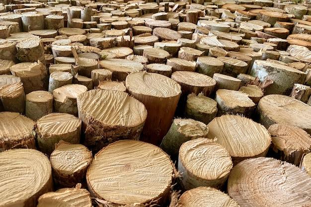 Sfondo da molti registri forestali.