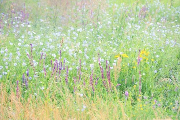 Sfondo erba e fiori in fiore in un campo, filtro