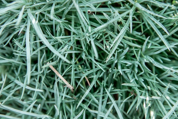 Sfondo di foglie di erba. primo piano dell'erba consistenza naturale. bellezza nella natura.