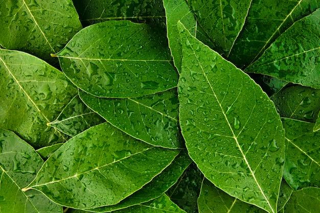 Sfondo foglie verdi con gocce d'acqua