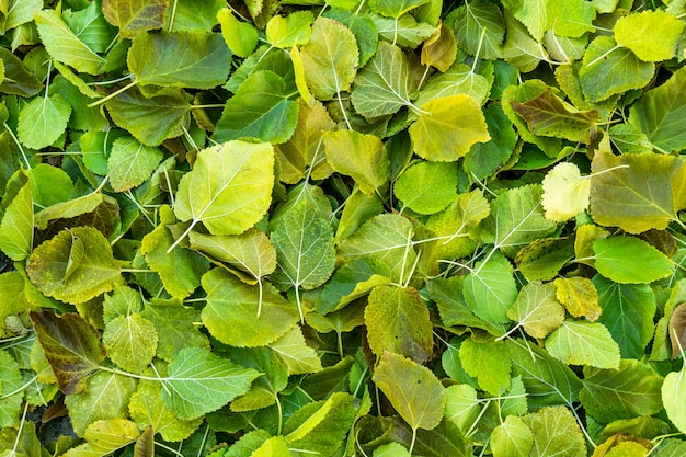 Sfondo gruppo autunno foglie d'arancio.