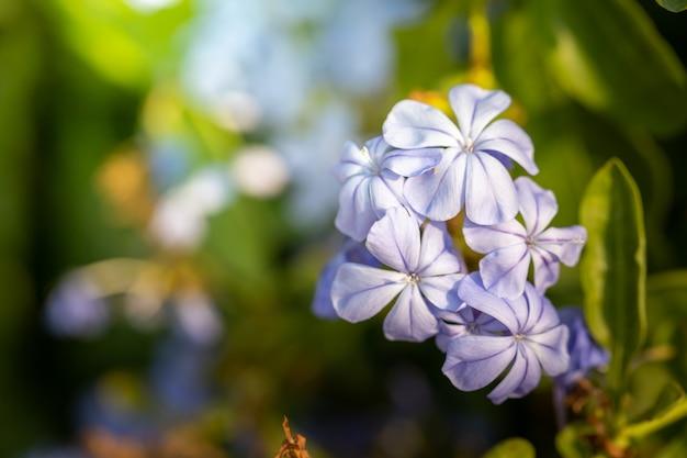 Immagine di sfondo di fiori colorati