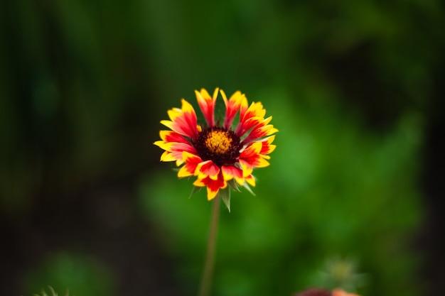 Immagine di sfondo di un fiore la sera su uno sfondo di erba verde