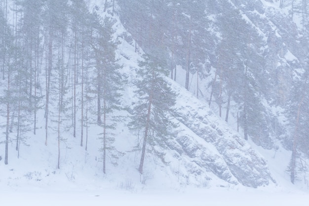 Foresta di pini di montagna del paesaggio di sfondo durante una tempesta di neve