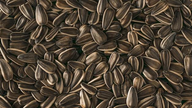 Sullo sfondo di un gran numero di grandi semi di girasole. la fresca resa del girasole.