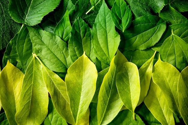 Sfondo fatto di diverse foglie verdi a strati, sfumatura gialla verde. copia spazio. layout creativo della natura, vista dall'alto, piatto. concetto di vita verde. avvicinamento