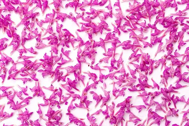 Sfondo di molti piccoli fiori primaverili rosa delicati su carta bianca