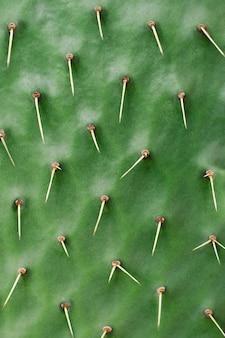 Natura di sfondo. sfondo naturale pianta succulenta del cactus