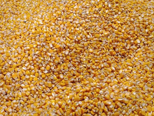 Sullo sfondo di un mucchio di chicchi di mais dolce giallo secco