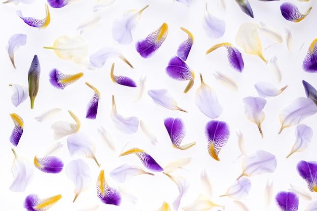 Sfondo di petali di iris viola. vista dall'alto, disteso.