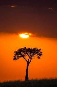 Lo sfondo del tramonto nella savana