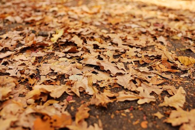 Struttura del fondo - primo piano secco delle foglie gialle appassite di autunno.