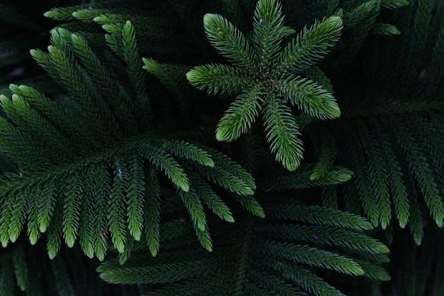 Texture di sfondo di foglie verdi scure naturali