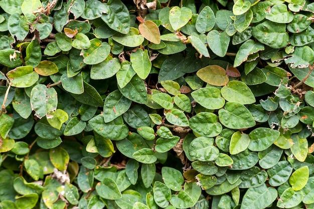 Texture di sfondo, erba verde, vista dall'alto.