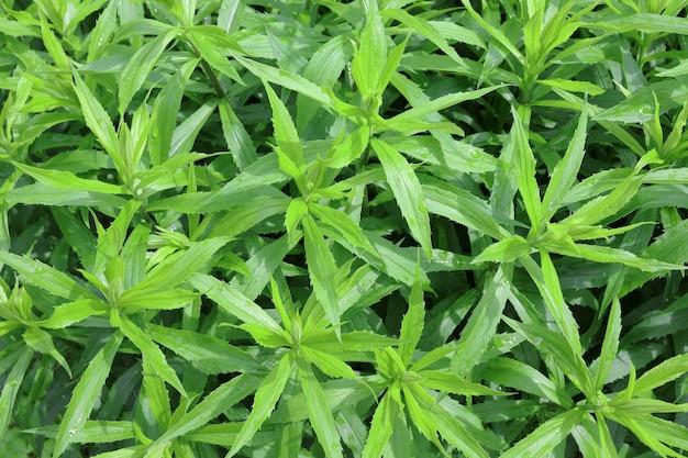 Trama di sfondo di foglie di piante verdi