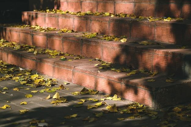Trama di sfondo di foglie gialle sfondo foglia autunnale foglie autunnali gialle e arancioni