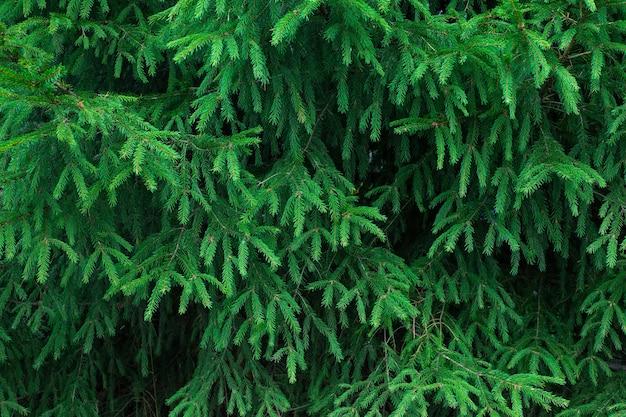 Sfondo di rami degli alberi.