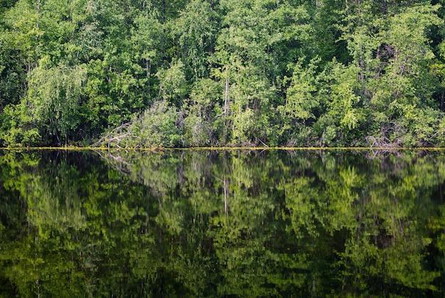 Alberi e arbusti di sfondo riflessi in una linea di riva di un lago forestale al centro dell'immagine