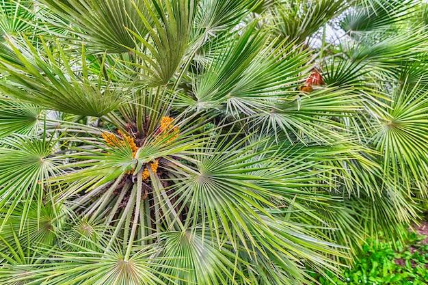 Sfondo con un motivo a fogliame verde di palme tropicali