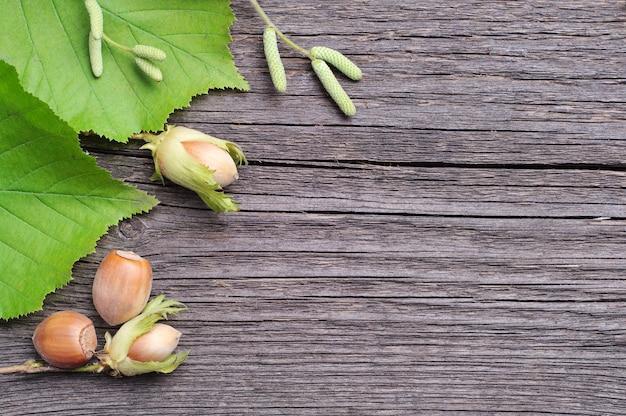 Sfondo con nocciole verdi e foglie d'albero