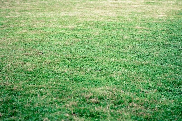 Sfondo con un prato verde estivo con erba appena falciata