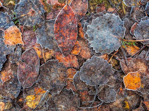 Sfondo con vecchi fogli di autunno
