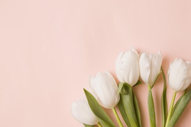 Sfondo con fiori bianchi. tulipani su uno sfondo rosa pallido. copia spazio.