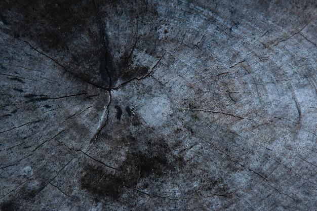 Sfondo con struttura in legno del tronco d'albero.