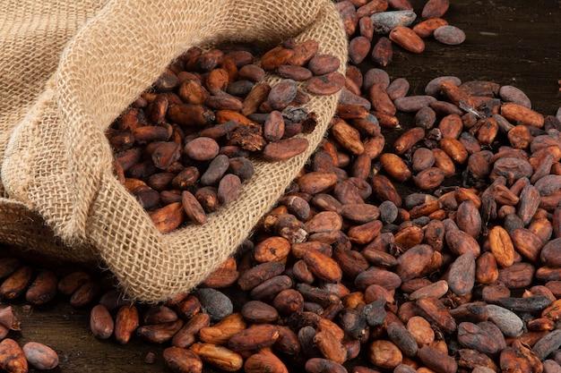 Borsa con fave di cacao crude del sud del brasile di bahia.