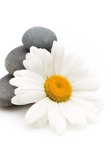 Pietre spa bilanciate con fiori di camomilla e superficie bianca.