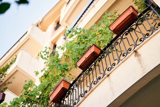 Balconi di un condominio con intreccio di verde in scatole ad angolo basso