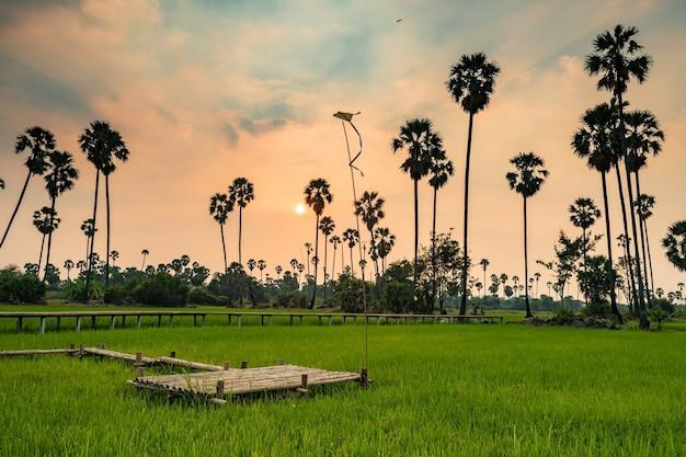 Punto di vista del sentiero per pedoni di bambù con l'aquilone alla fattoria di palma da zucchero e riso al tramonto, pathum thani, thailandia. destinazione di viaggio naturale nel paese tropicale del siam.