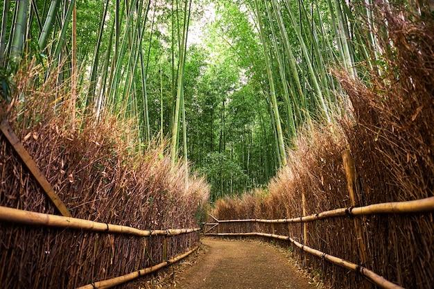Foresta di bambù ad arashiyama, kyoto, giappone.