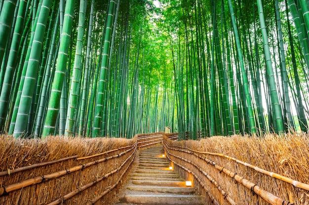 Foresta di bambù a kyoto, in giappone