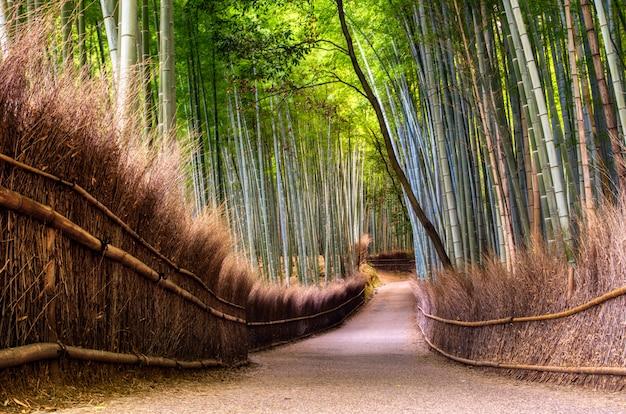 Foresta di bambù a kyoto