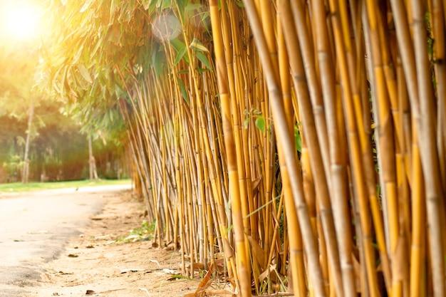Idea della natura del recinto di legno della foresta di bambù